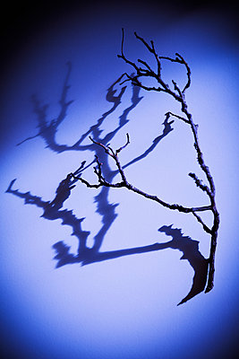 Branch and shadow - p1149m2115793 by Yvonne Röder