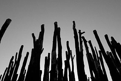Forest dieback - p1800720 by Martin Llado