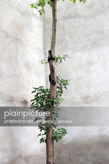 Small tree - p1063m2151403 by Ekaterina Vasilyeva