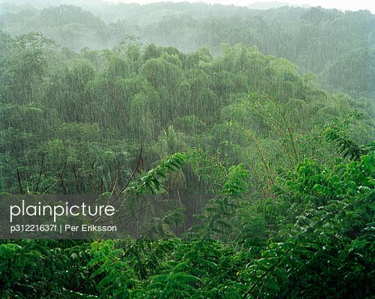 Rain in the rain forest Tobago.