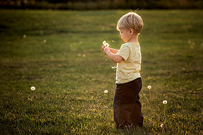 Full length of boy holding dandelions while standing on grassy field at park - p1166m1545489 by Cavan Social