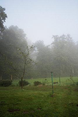 Morgennebel - p1174m982950 von lisameinen