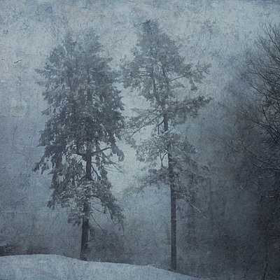 Trees in winter - p1633m2211123 by Bernd Webler