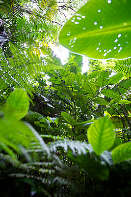 Caribbean rainforest - p1980325 by David Breun