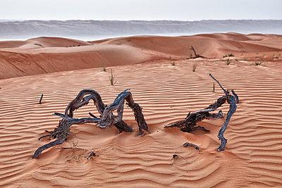 Desert - p631m913059 by Franck Beloncle