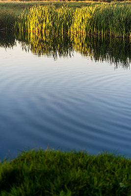 Pond - p1170m1516281 by Bjanka Kadic