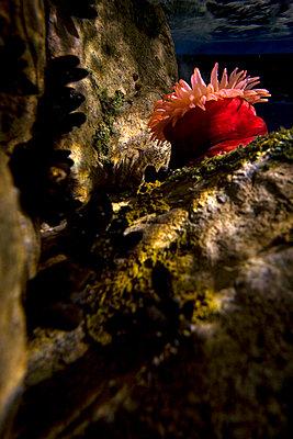 Riesenaquarium in Lissabon - p2687233 von Arne Landwehr