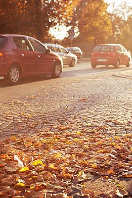 Autumn leaves on road - p312m1121755f by Dan Lepp