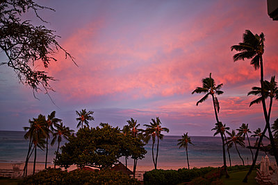 Palm Trees and ocean in Big Island, Hawaii, - p579m2015586 by Yabo