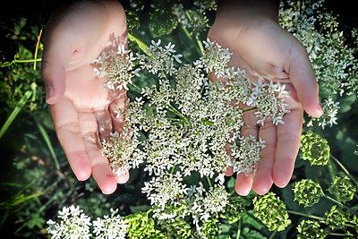 Kinderhände und Pflanzen - p636m2021673 von François-Xavier Prévot