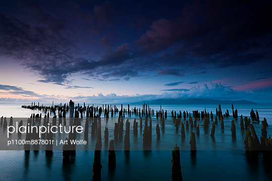 The weathered remains of wood pilings. Upright wooden stumps in water. Oregon
