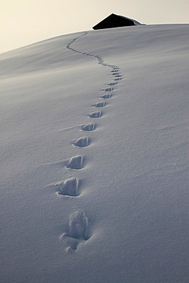Footprints leading up to cabin - p30120476f by Gerhard Fitzthum