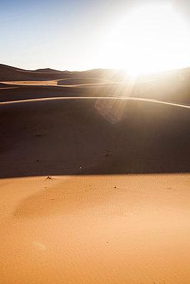 Backlight in Sahara Desert I - p941m907821 by lina gruen