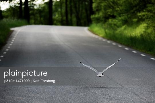 p312m1471990 von Karl Forsberg