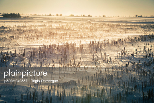 Stoppelfeld im Winter - p829m949337 von Régis Domergue