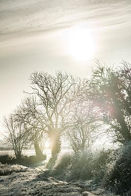 Großbritannien, Frühmorgendlicher Nebel bedeckt frostbedeckte Bäume  - p1057m2228688 von Stephen Shepherd