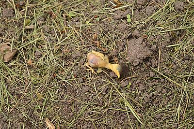 Totes Küken - p1631m2208636 von Raphaël Lorand