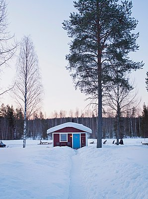 Winter Cabin and Husky dogs, Norrbotten, Sweden. - p429m1148854 by Philip Lee Harvey