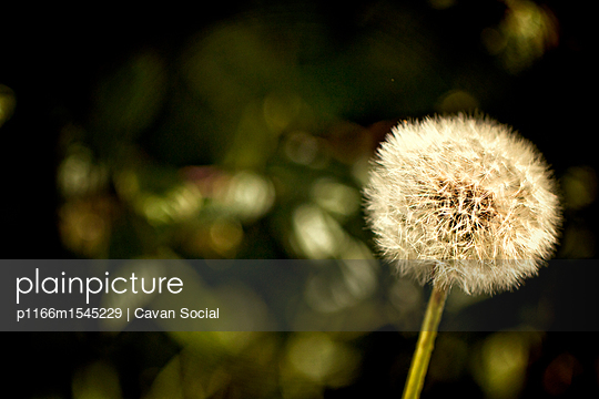 p1166m1545229 von Cavan Social