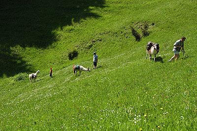 Alpaca Trekking - p1354m2288125 by Kaiser