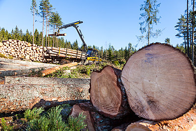 Cut logs at the edge of forest - p312m1570818 by Thomas Adolfsen