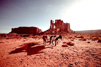 Monument Valley - p4450602 von Marie Docher
