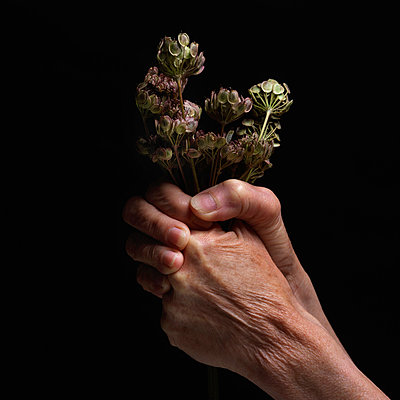 Hand with a plant - p813m916233 by B.Jaubert