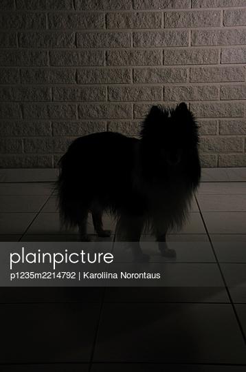 Silhouette of a dog - p1235m2214792 by Karoliina Norontaus