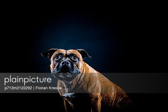 p713m2122292 by Florian Kresse