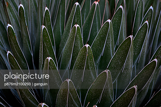 agave - p876m2100293 by ganguin