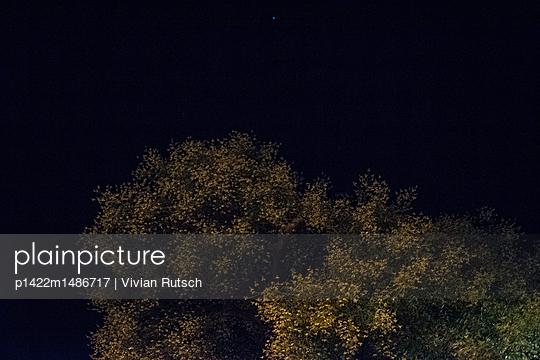 Blühender Baum bei Nacht - p1422m1486717 von Vivian Rutsch