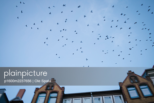 Germany, Lower Saxony, Hannover, Birds in flight - p1600m2237656 by Ole Spata