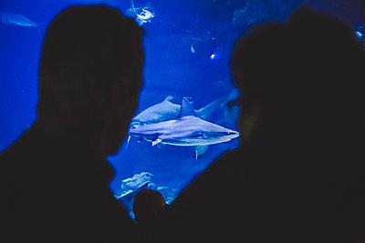 aquarium's shark - p1150m1209156 by Elise Ortiou Campion