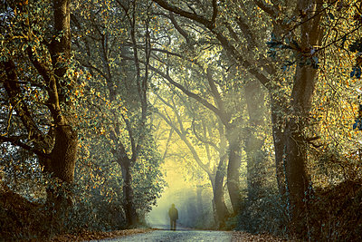 Italy, Tuscany, Val d'Orcia, person on tree-lined road in morning fog - p300m1206370 by Christina Falkenberg