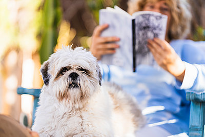Dog sitting with woman in back yard - p300m2276014 by Manu Padilla Photo