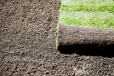 Fresh sod on dirt layer - p312m1211265 by Rebecca Wallin