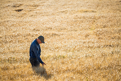 Caucasian farmer standing in field checking crop - p555m1303711 by Steve Smith