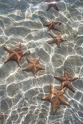 Starfish - p741m892066 by Christof Mattes
