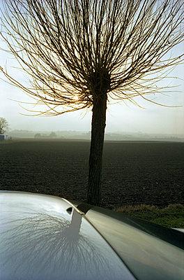 Baum spiegelt sich im Auto - p972m1136696 von Martin Palm