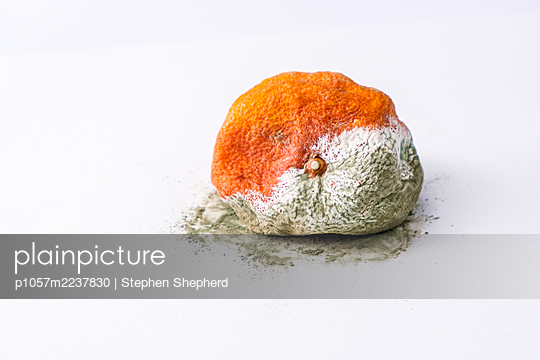 Rotten Orange fruit - p1057m2237830 by Stephen Shepherd