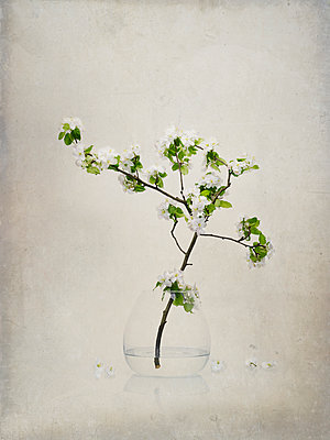 Zweig Blüten Vase - p1312m1137628 von Axel Killian