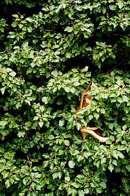 Schuhe im Busch - p2370511 von Thordis Rüggeberg