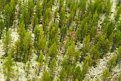 Aerial view of forest - p312m956834f by Hans Berggren