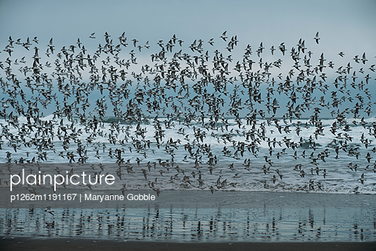 Oregon Coast Birds  - p1262m1191167 by Maryanne Gobble