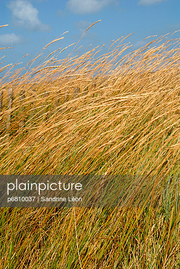 Herbs and dunes - p6810037 by Sandrine Léon