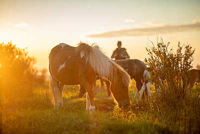 Couple hiking with wild ponies on Mount Rogers in Virginia. - p1166m2261251 by Cavan Images