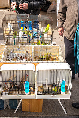 Cadged birds being sold at street market - p1201m1008155 by Paul Abbitt