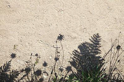 Shadow play - p606m1091512 by Iris Friedrich