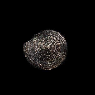 Muschelschale - p910m2182358 by Philippe Lesprit