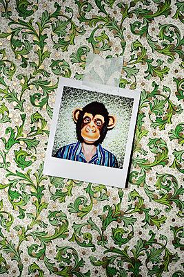 Instant photo of a man with a monkey mask against a wallpapered wall - p1423m2115351 by JUAN MOYANO